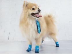 Lupo investe no mercado têxtil para animais.
