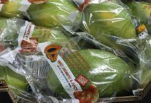 Braskem desenvolve embalagem para exportação de papaia