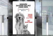 Royal Canin celebra 50 anos de atuação no mundo com nova campanha